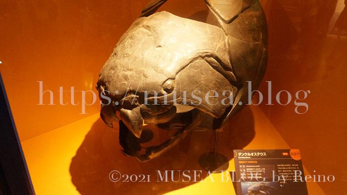 「海のハンター展」ダンクルオステウス(Dunkleosteus)