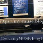 京急油壺マリンパークのラブカの標本