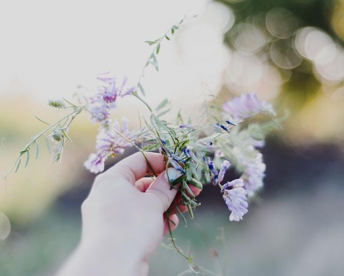 私たちは、一言で花といっても、バラ、コスモス、チューリップ、デイジー、朝顔、桜などがあり、これらはまったく形が違うのに私たちはこれらを無条件で花と判断する。