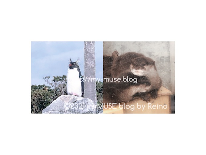 油壺マリンパークのペンギンとカワウソ