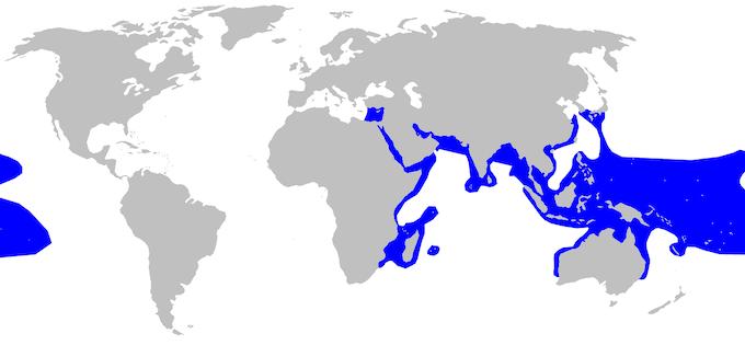 ツマグロの分布域
