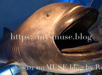 京急油壷マリンパークのメガマウスの標本