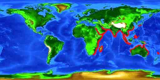 """出典:<a href=""""https://www.floridamuseum.ufl.edu/discover-fish/species-profiles/stegostoma-fasciatum/"""" target=""""_blank"""">トラフザメの分布域</a>"""