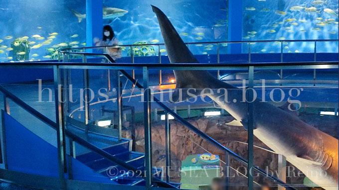 京急油壺マリンパーク(水族館)の大きなサメ水槽