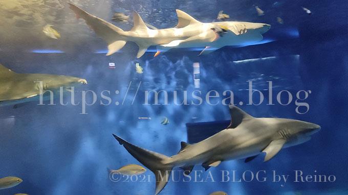 京急油壺マリンパーク(水族館)のサメ水槽は華やか