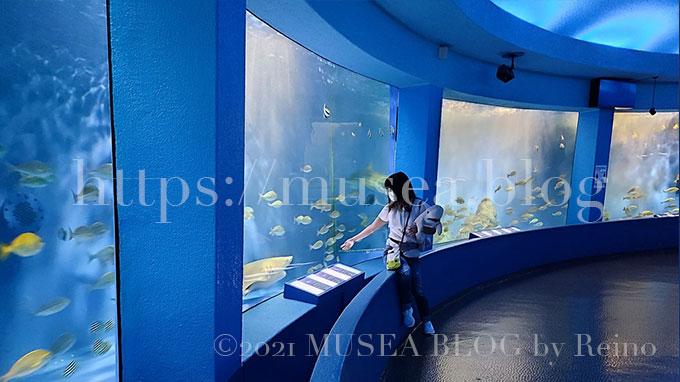 京急油壺マリンパーク(水族館)といえばサメ水槽