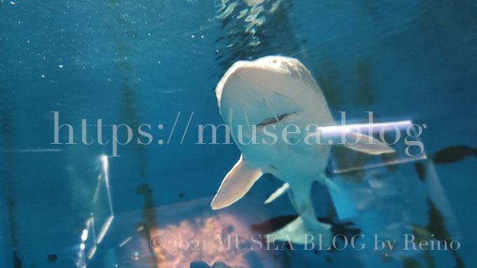 水族館、京急油壺マリンパークの見どころ・サメの種類を水族館好きの私が解説