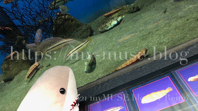 にゃぶりに関心を示しているカワハギ、京急油壺マリンパーク(水族館)