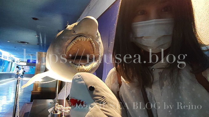 京急油壷マリンパーク(水族館)の撮影スポット!オオワニザメと記念撮影