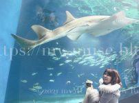 水族館マクセルアクアパーク品川のワンダーチューブの世界で唯一展示されているドワーフソーフィッシュ