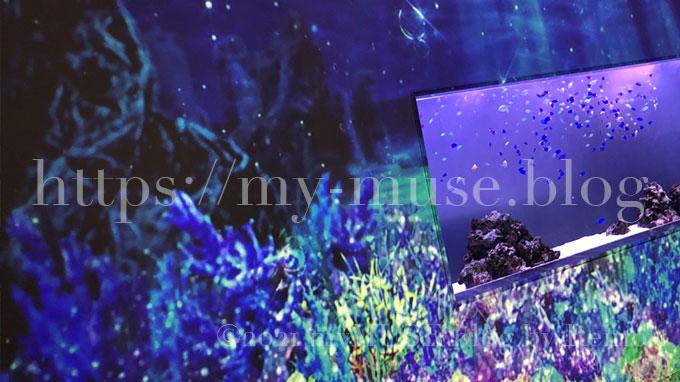 水族館マクセルアクアパーク品川のエントランスの水槽