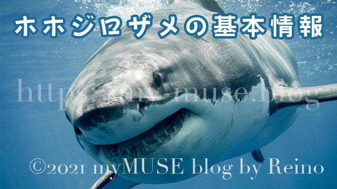 ホホジロザメ の基本情報
