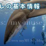 一番危険な人食いザメと恐れられているヨゴレはどんなサメ