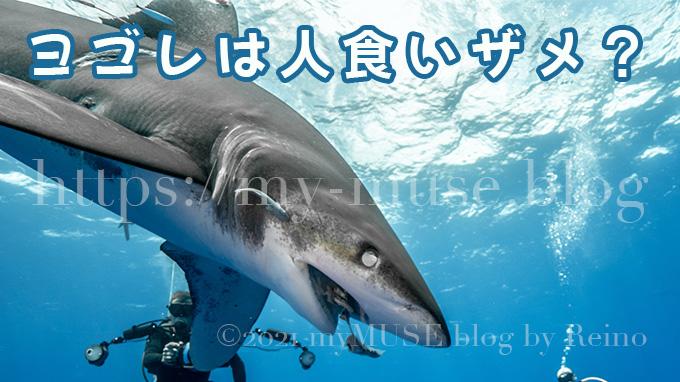 ヨゴレは危険で凶暴な人食いザメなの?