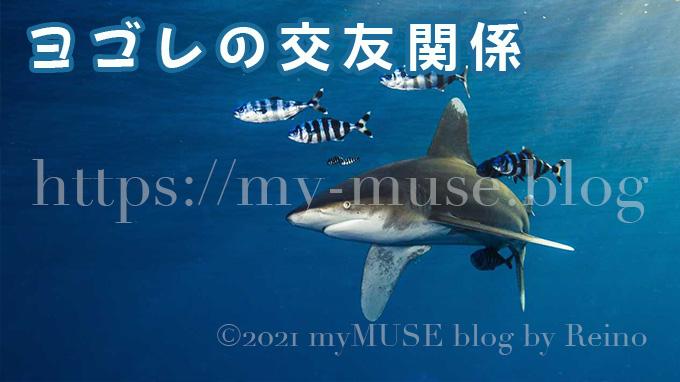 サメのヨゴレと他の魚類の交友関係