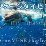 サメケージダイビングとは?檻の向こうに巨大ホホジロザメという究極のサメ体験