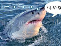 かわいすぎるホホジロザメのスパイホッピング