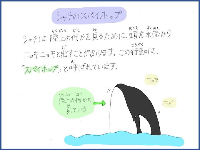 名古屋港水族館ホームページ