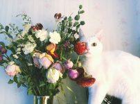 サービス比較!花のサブスク(お花の定期便)で500円から花のある暮らしを始めよう