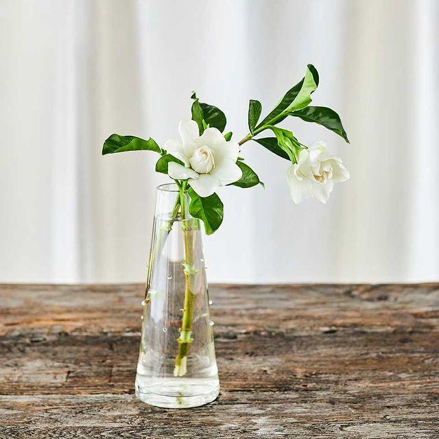 青山フラワーマーケットで購入した花瓶(フラワーベース)ドットガラス
