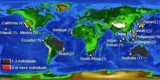 メガマウスザメが発見された世界中の場所