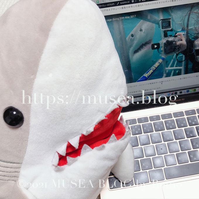 写真多数!おかえりモネのサメのぬいぐるみを買える場所!菅波先生のかわいい鮫