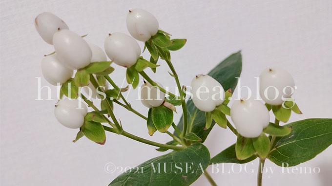 ヒペリカムの花言葉・由来・原産地・英語名・切り花の水の量