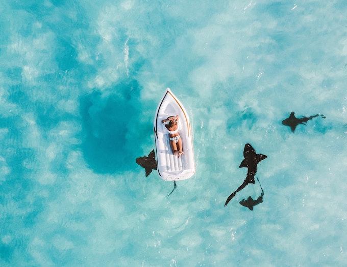 ボートとサメ