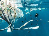 6月8日は世界海洋デー!プラスティックゴミの汚染から海を助けるには