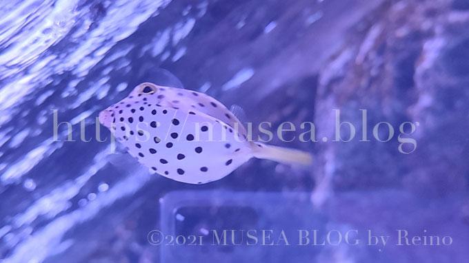 写真あり!xiaomi(シャオミ)redmi note 10 proで水族館のサメや魚たちを撮影