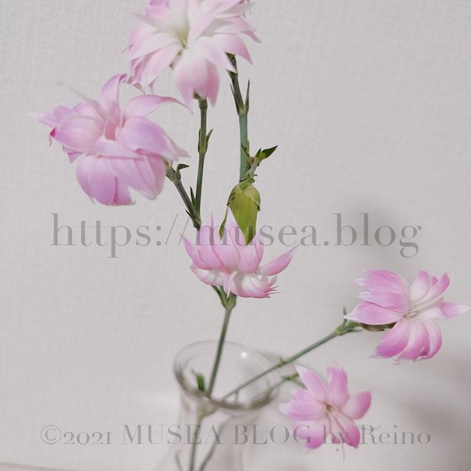 スプレーカーネーション(スターチェリー)の花言葉・由来・原産地・英語名・切り花の水の量
