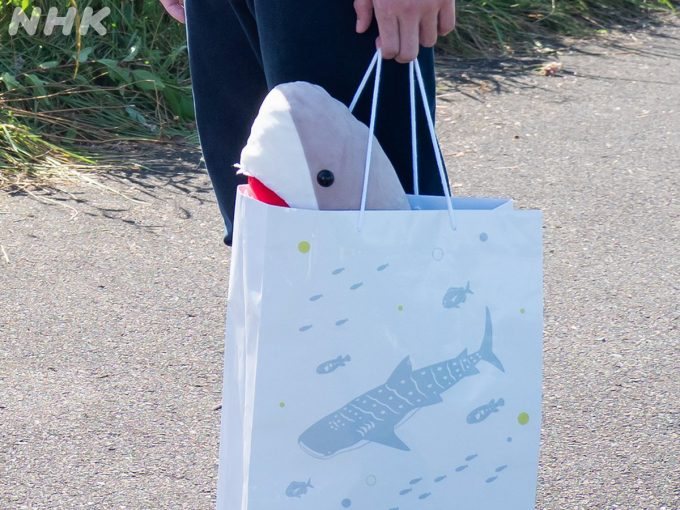 連続テレビ小説「おかえりモネ」のかわいいサメのぬいぐるみを買えるところ、大きさ、値段