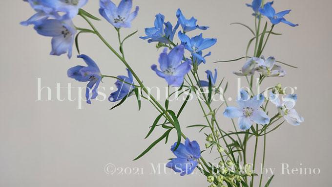 デルフィニウムの花言葉・由来・原産地・英語名・切り花の水の量