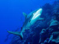 【評価高い】サメ映画の初心者でも楽しめる名作・正統派のサメ映画まとめ