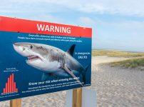 サメのドキュメント番組「シャークハンター命知らずな奴ら」を無料で見るには?ホホジロザメ好き必見