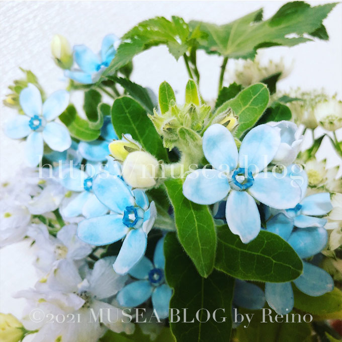 HitoHana(ひとはな)のお花は長持ちする?