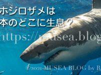 ジョーズで有名なホホジロザメは日本のどこに生息しているの?目撃談や捕獲情報まとめ