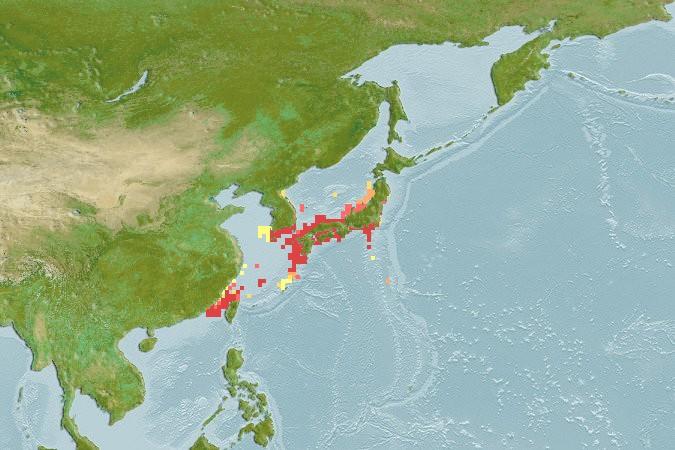 ネコザメの分布図