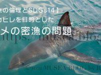 フカヒレを目的としたサメの密漁【魚の倫理とSDGs14】