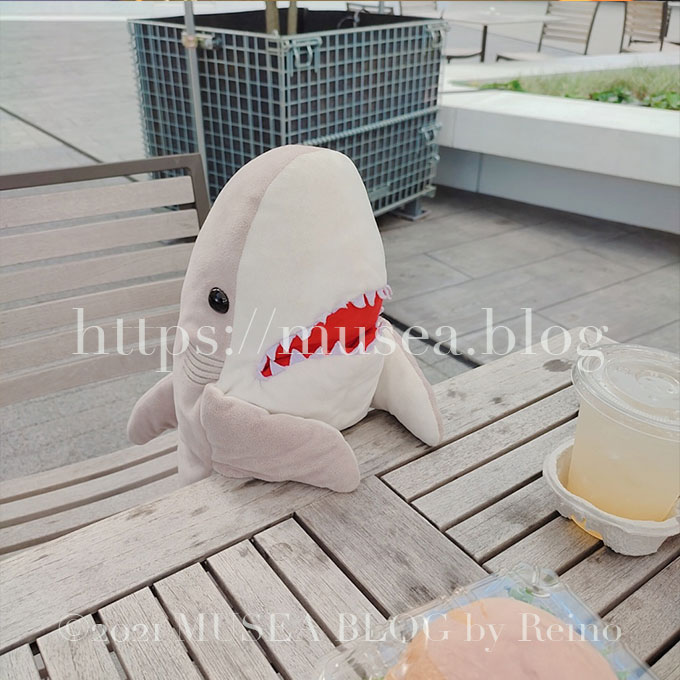 サメ好きが語る!「おかえりモネ」菅波先生のサメ回の感想や分析