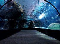 ホホジロザメを水族館で見ることはできるの?過去の最長飼育記録なども解説