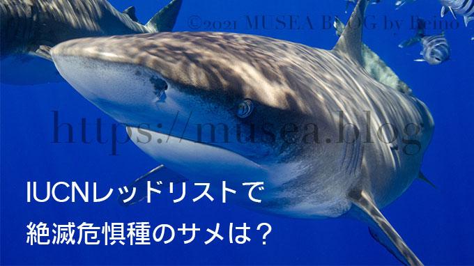 絶滅危惧種のサメの種類とは?IUCNレッドリストのまとめ【2021年10月版】